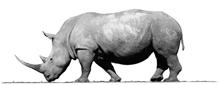 prodent nosorog